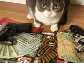 Pictures Thug Life Gangster Cats