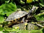 Abandoned Terrapin Amazes Experts After Surviving Years
