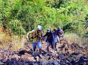 Overcoming Hurdles, Conquering Mountains