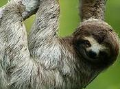 What Sloth?
