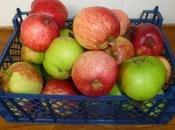 More Apples .....