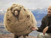 Shrek Sheep That Shorn Shear