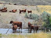 Given Notice About Endangered Species Violations Idaho