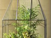 'Terrariums, Gardens Under Glass'- Book Review