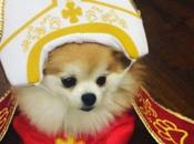 Crazy Catholic Pope Dogs