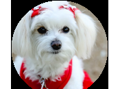Zoe-Tricks, Comfort Laughs, Hospice Therapy Dog's Spotlight, Part