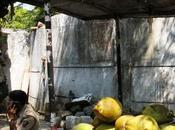Coconut Water Health Craze!