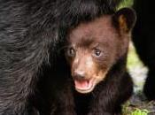 Psychological Reality Equals Orphaned Bear Cubs