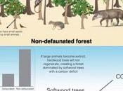 Decline Tropical Animals Could Hasten Climate Change