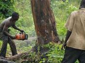 Fighting Climate Change with Trees Africa