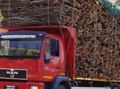 Inside Sardinia: Cork from Gallura