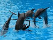 """Dolphins Whales Become """"non-human Persons"""": Should They Have Rights?"""