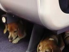 Seven Tips Traveling With Fido