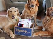 Curbing Your Dog's Boredom #ChewyInfluencer