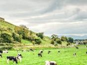 Unexpected Living Treasures Ireland