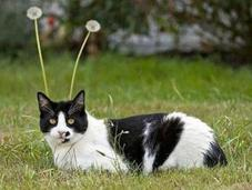 Perfectly Timed Shots Cats