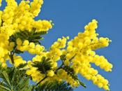 Happy International Woman's Day, Torta Mimosa Celebrate
