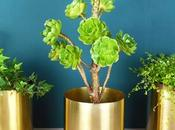 Golden Rules Decorating with House Plants