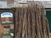 Sticks Bean Poles