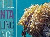 Beautiful Lanta Snorkeling Experience