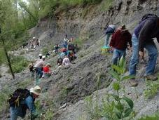 Find Fossils