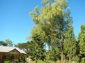 Cebu Southern Ecological Farm: Glimpse Sustainable Organic Farming