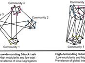 Essential Role Default Mode Network Higher Cognitive Processing.