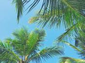 Paradise Ilha Grande