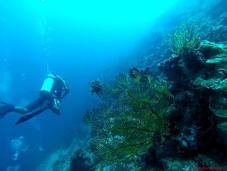 MyBlueEarth: Doing Share Cleaning Seas