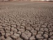 Haiku Drought