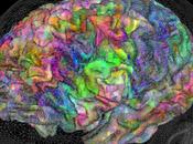 Semantic Maps Brains Some Interactive Graphics