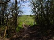 South Downs Way: Winchester Eastbourne