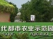 Shaun Sheep, Poisonous Plants Butter Lettuce Bouquets. This China.