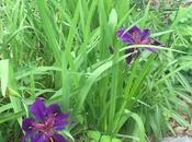 Garden Log, 5.12.16