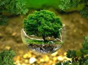 Astonishing Ways Protect Environment Save Mother Earth