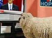 Nation Sheep: Americans Support Transgender Bathroom Increased Just Months
