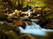 Warming Climates Mountain Stream Watersheds