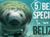 Best Species Belize