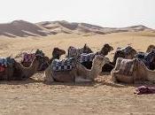 Morocco Odyssey Sahara Desert (ii)
