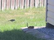 Birds Chipmunks Along Especially When There Baby Birds!
