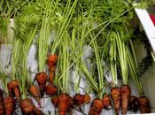 Carrots, Carrots!
