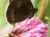 Lonely Ringlet, Other Garden Tales