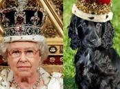 Royal Dogs Look Like Queen