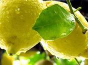 Limoncello Tiramisu Recipe