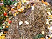 Items Creating Safe Compost