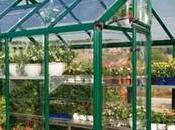 Small Greenhouse Kits Inside Home