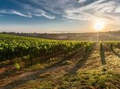 Terrific Reasons Locally Grown Food