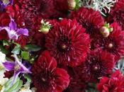 Deep Dahlias Hydrangeas