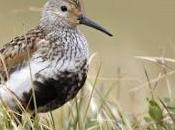 Scientists Migration Paths Arctic Breeding Birds