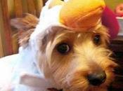 Clucking Dogs Dressed Chickens
